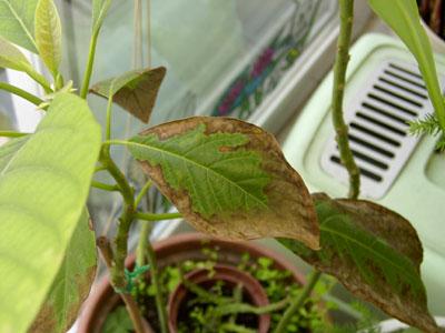 plante verte feuille marron